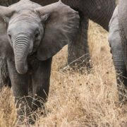The Story Of The Baby Elephant