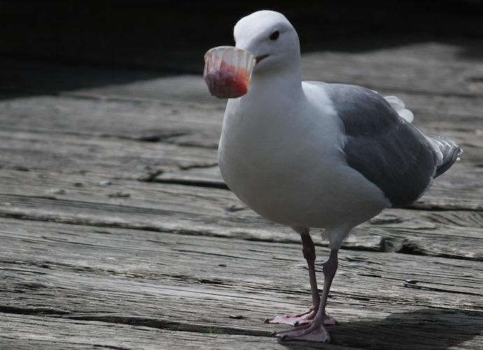 The Economy Of Birds