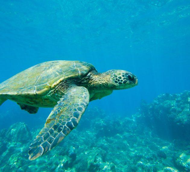 The Only Maui Hawai'i Itinerary You'll Ever Need
